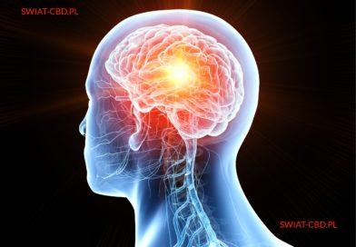 Unterstützt das CBD-Öl die Neurogenese?